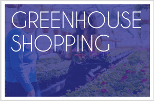 Greenhouse Shopping